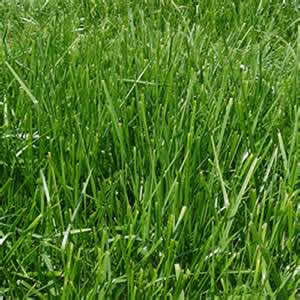 Nj watersavers for Tall red grass